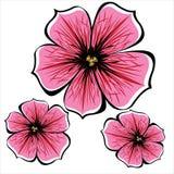 Розовые цветки петуньи изолированные на белизне Стоковое Фото