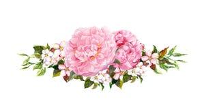Розовые цветки пиона, белое яблоко или вишня цветут Акварель в винтажном стиле иллюстрация штока