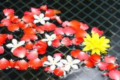 Розовые цветки плавая вода Стоковая Фотография RF