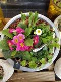 Розовые цветки с белой бабочкой стоковая фотография rf