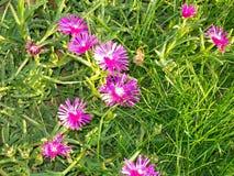 Розовые цветки, трава и тучные заводы стоковые фотографии rf