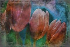 Розовые цветки тюльпанов закрывают вверх текстурированный стоковые изображения