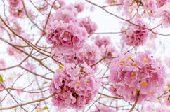 Розовые цветки Стоковое Изображение RF