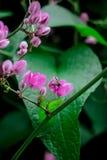 Розовые цветки Стоковое Фото