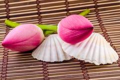 Розовые цветки nucifera Nelumbo, конец вверх, изолированная, деревянная предпосылка Стоковое Изображение RF