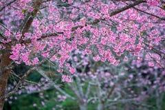 Розовые цветок и космос для текста Стоковая Фотография