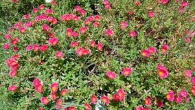 Розовые flowerettes Стоковое Изображение RF