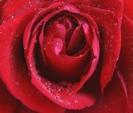 розовые waterdrops Стоковая Фотография RF