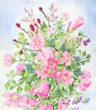 розовые wildflowers Стоковые Фотографии RF
