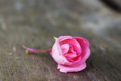 Розовый бальзам на древесине стоковая фотография