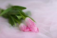 Розовый букет лож тюльпанов Стоковые Фото