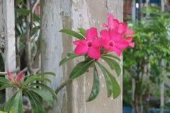 Розовый букет цветка Стоковые Фото