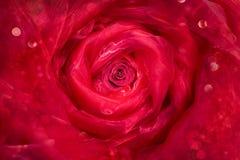 Розовый бутон в Drapery Стоковое Изображение