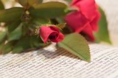 Розовый бутон на книге Стоковая Фотография RF