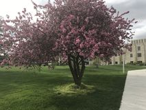 розовый вал Стоковые Изображения RF