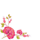 Розовый вектор цветков иллюстрация штока