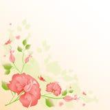 Розовый вектор цветков Стоковые Изображения