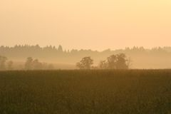 Розовый восход солнца на поле Стоковые Фото