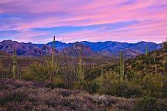 розовый восход солнца Стоковая Фотография RF