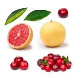 Розовый грейпфрут с клюквой Стоковое фото RF