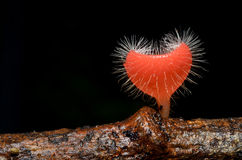 Розовый гриб чашки ожога в влюбленности Стоковые Изображения RF
