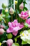 Розовый дизайн цветков лотоса для украшения Стоковая Фотография RF