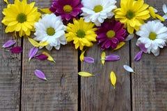 Розовый, желтый и белый стоцвет цветет граница День ` s дня рождения, матери, ` s валентинки карточка дня, 8-ое марта, свадьбы ил Стоковая Фотография RF