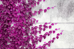 Розовый завод Creeper на стене Стоковые Изображения