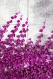 Розовый завод Creeper на стене Стоковые Фотографии RF