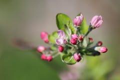 Розовый зацветать цветков стоковая фотография rf