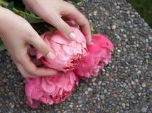 Розовый зацветенный пион в руках стоковое фото rf