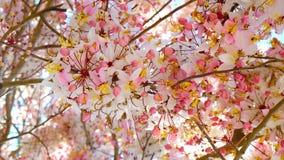 розовый ливень Стоковая Фотография