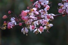 розовый ливень Стоковые Изображения