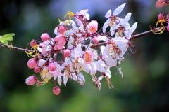 розовый ливень Стоковая Фотография RF