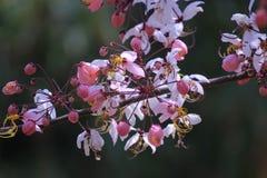 розовый ливень Стоковые Фото