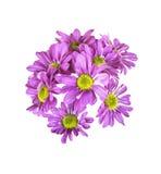 Розовый изолированный цветок букета стоковые фото