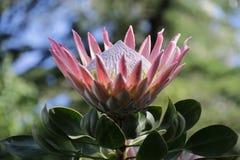 Розовый и белый цветок стоковое фото