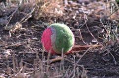 Розовый и зеленый теннисный мяч Стоковые Фотографии RF