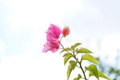 Розовый и красный зеленый цвет цветка выходит заводы Стоковое фото RF