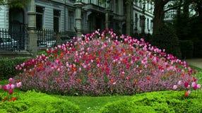 Розовый и красный flowerbed тюльпанов Стоковая Фотография RF