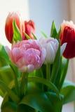Розовый конец-вверх тюльпана Стоковое фото RF