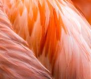 Розовый конец пера фламинго вверх Стоковые Фото