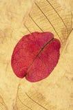 Розовый коллаж лепестка Стоковая Фотография