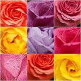 Розовый коллаж цветков Стоковое фото RF