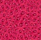 Розовый красный цвет предпосылки роз Стоковые Изображения