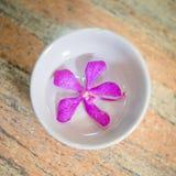 Розовый лепесток на стеклянной чашке Стоковое Фото