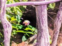 Розовый малый цветок травы в деревянной рамке Стоковая Фотография