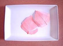розовый мир стоковая фотография rf