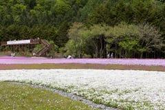 Розовый мох на Mt fuji Стоковое Изображение RF