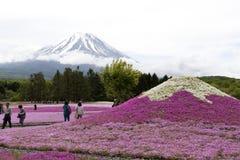 Розовый мох на Mt fuji Стоковое фото RF